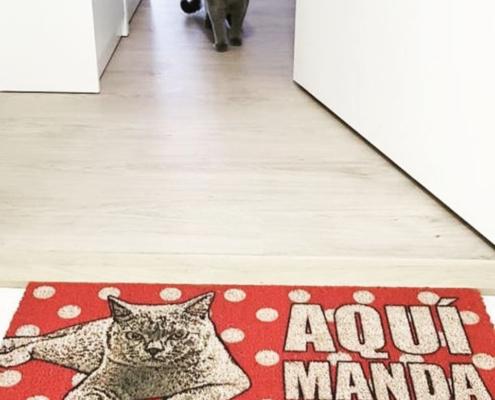 Animal Studio